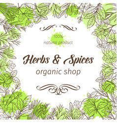 hand drawn sketch herbs and spices vector image