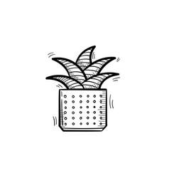 mother-in-law tongue plant in a pot sketch icon vector image