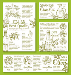 olive oil sketch banners or posters of olives vector image