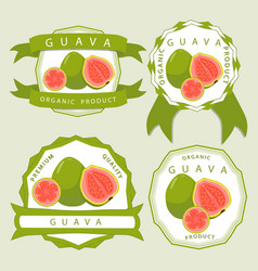 the guava vector image