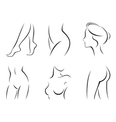 Set of stylized body parts vector image vector image