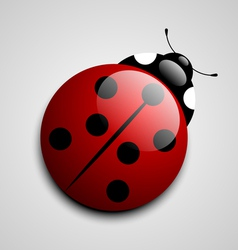 Ladybug icon vector image