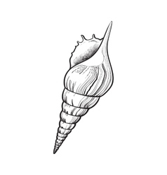 Spiral conch sea shell isolated sketch style vector