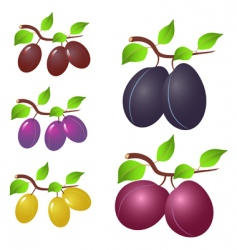 plum and leaves vector image vector image