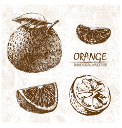 digital detailed orange hand drawn vector image