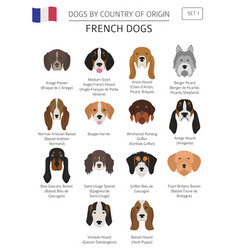 Dogs country origin french dog breeds vector