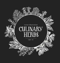 hand drawn culinary herbs design template on vector image