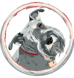 Breed miniature schnauzer dog closeup vector
