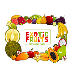 summer food frame exotic tropical fruits vector image