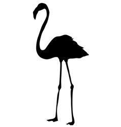 silhouette of flamingo vector image vector image