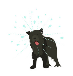he dog shakes the water vector image vector image