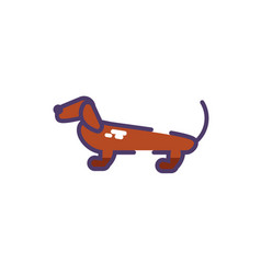 Cute dachshund dog on white background vector