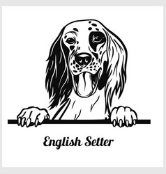 English setter - peeking dogs - breed face head vector