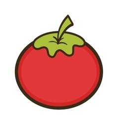 red tomato vegetable vector image
