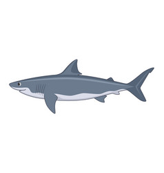 white shark fish on a background vector image