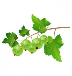 green gooseberry vector image vector image