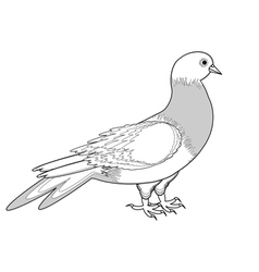 A monochrome sketch of a pigeon vector image vector image
