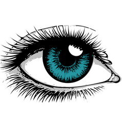 a beautiful blue woman eye vector image