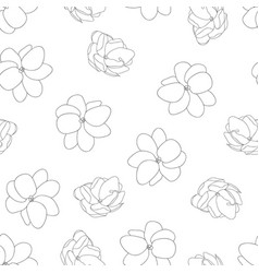 arabian jasmine outline on white background vector image