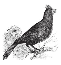 Cardinal of Virginia engraving vector image vector image