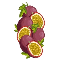 Passion Fruit isolated composition vector image