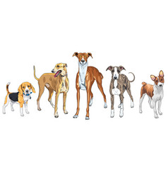 Set dogs different breed vector