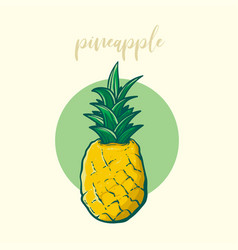 sketch of pineapple vector image