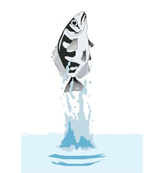 Fish out of water vector