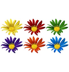 Flowers in six different colors vector image