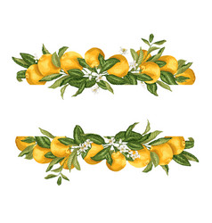Lime template frame border wth citrus fruits and vector