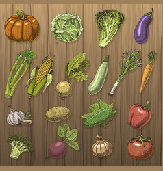 Set of hand drawn engraved vegetables vegetarian vector