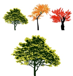 Set of real colorful autumn tree collection vector image