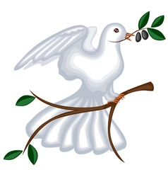 Dove with olive branch vector