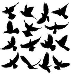 Concept love or peace Set of silhouettes doves vector image