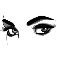 Detailed female eyes with long eyelashes vector