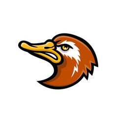 Laysan duck head mascot vector