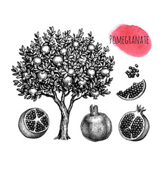 Pomegranate ink sketch collection vector