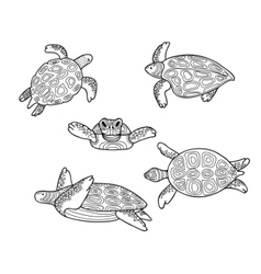 decorative image of floating sea turtles in vector image