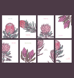 Minimalistic trendy color cards with protea vector