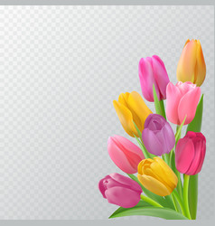 spring card with tulips vector image
