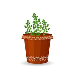 thyme in a flower pot vector image