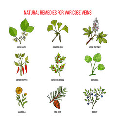 Varicose vein herbal remedies vector