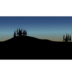 spruce of silhouette vector image vector image
