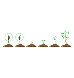 green shoots with leaves and ground vector image