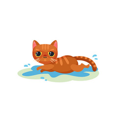 naughty kitten lying in a puddle on the floor vector image