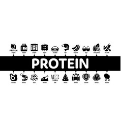 protein food nutrition minimal infographic banner vector image