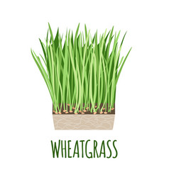 wheatgrass icon in flat style on white background vector image