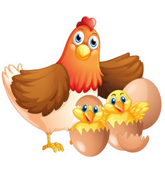 mother hen and two chicks vector image vector image