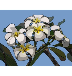 Branch with flowers frangipani vector