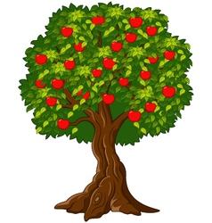 Green Apple tree full of red apples isolated vector